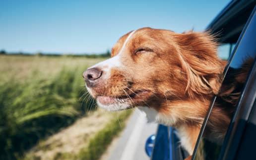 Vantagens em alugar um carro na sua viagem: